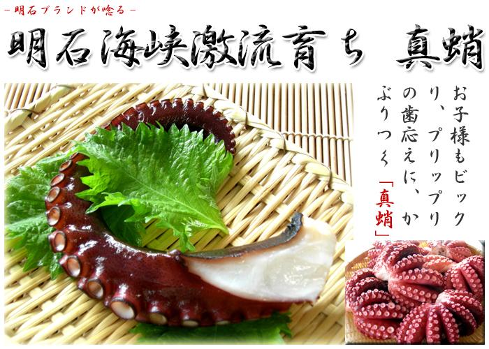 明石蛸,明石産マダコ,真蛸,たこ,タコ